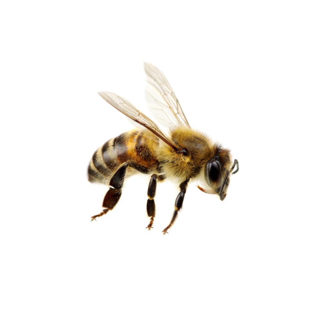 bee pest control thumb