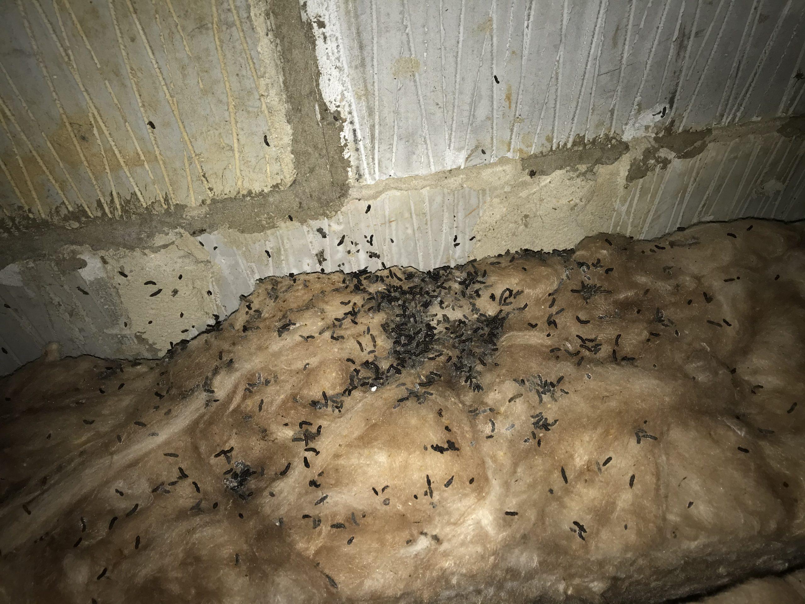 Bats and Pest Control