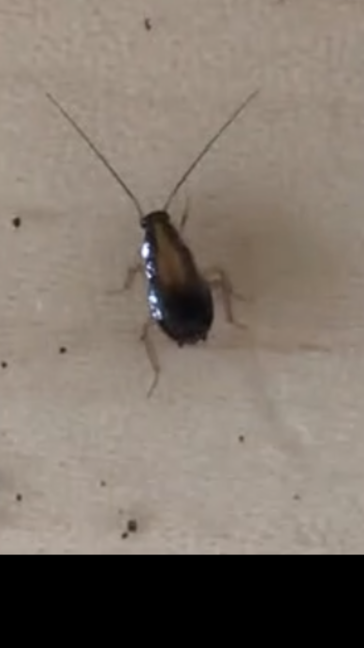 Cockroaches Are More Common Than You Might Think!