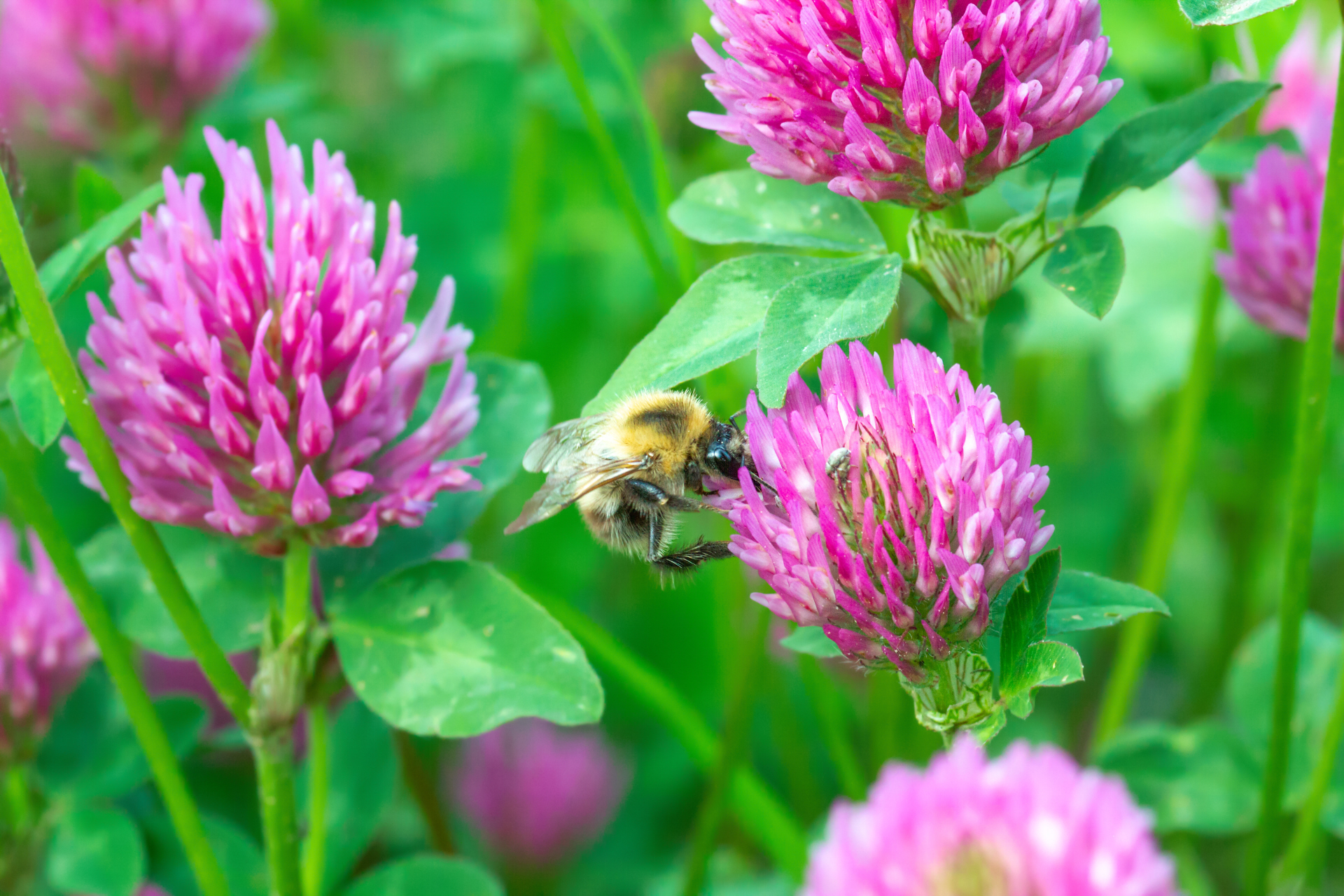 How to Attract Bees this Spring