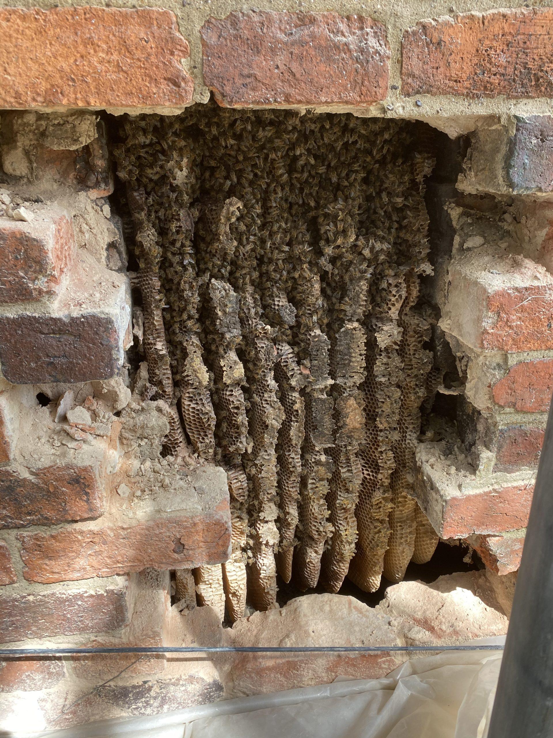 Honeybee Cut-Outs