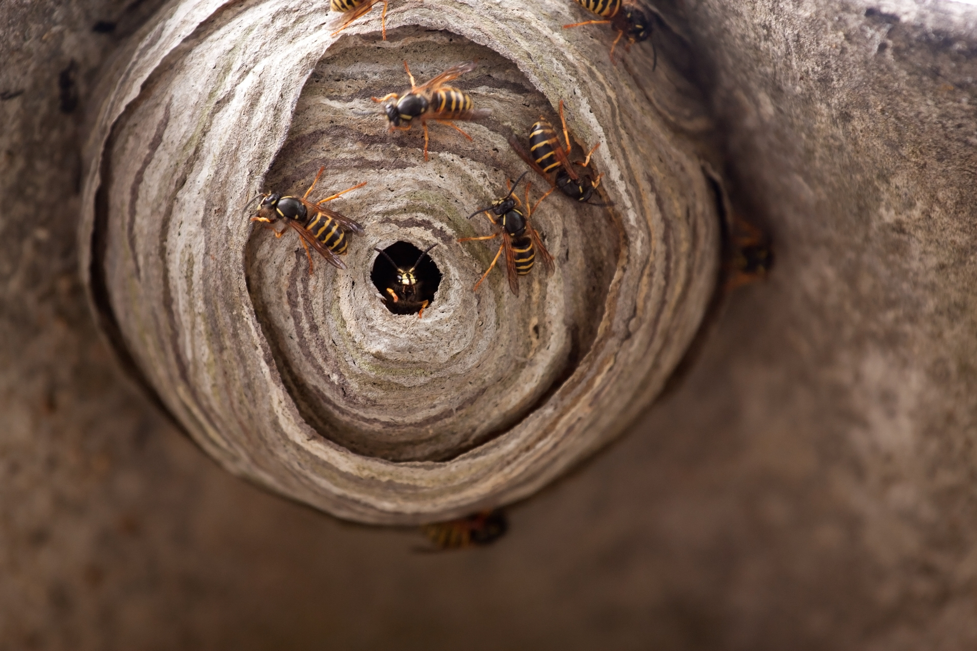 What To Do About A Wasp Nest